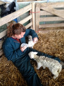 Lunch times for little lambies!