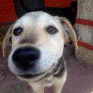 My puppy friend.