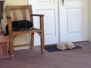 9:5 DogsinChairs