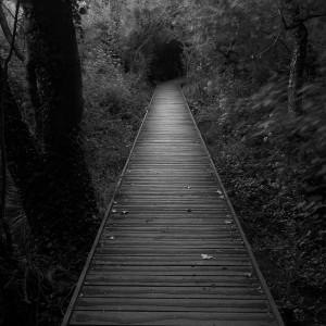 dark-path-970882-2144