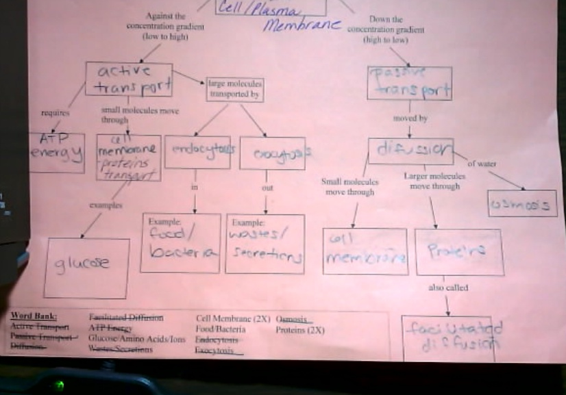 Cell Transport Concept Map Answer Key Mrs Derochers Super