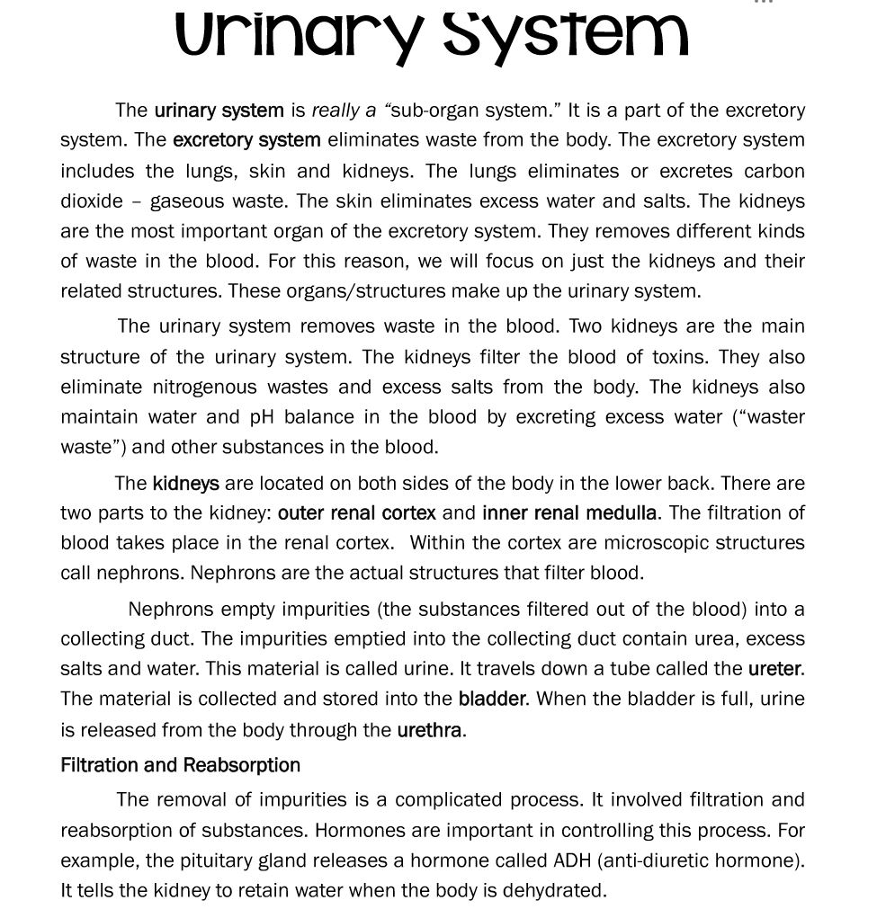 Urinary System Informational Reading: 3rd/4th/7th and 8th Students ...