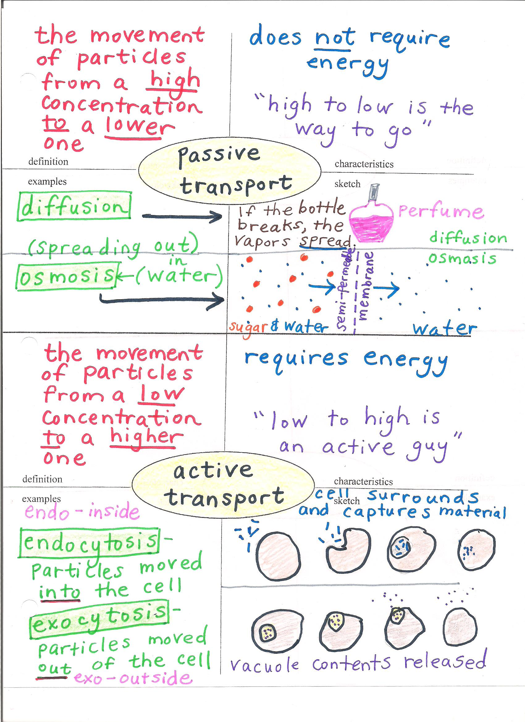 Active And Passive Transport Diagram
