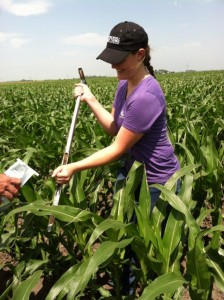 Crystal Dau collects soil samples as a part of her internship for Monsanto.