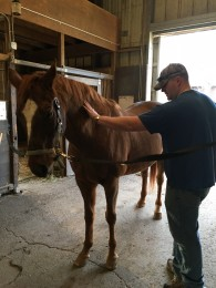 Equine therapy at retreat