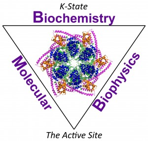 K-State Biochemistry and Molecular Biophysics, The Active Site