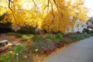 November in the KSU Gardens
