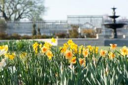 Spring_bulbs