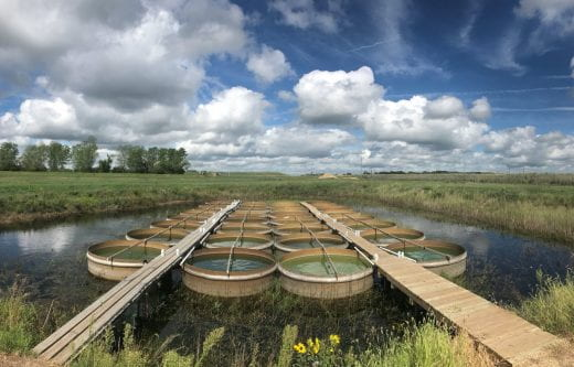 About 24 cylindrical tanks that are filled with water, some green with algae, sit in Milford reservoir.