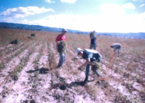 Mirtha and her siblings working in the fields