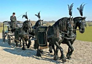 Victorian Funeral Carriage