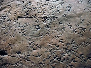 Triassic eocene bird tracks, Argentina