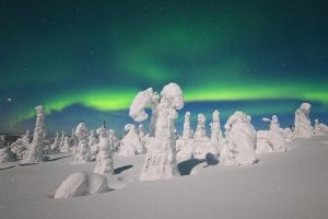Lapland Trees in winter with Northern Lights