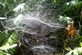 Spiderweb in jungle