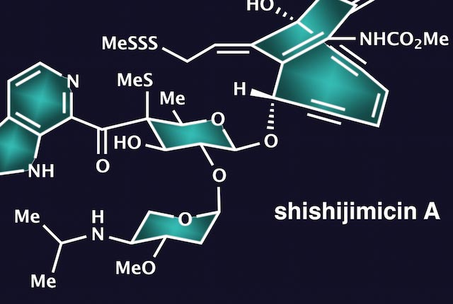 The molecule shishijimicin A, discovered more than a decade ago in a marine animal known as a sea squirt and found to be highly toxic to cancer cells, has been synthesized by the Rice University laboratory of chemist K.C. Nicolaou.