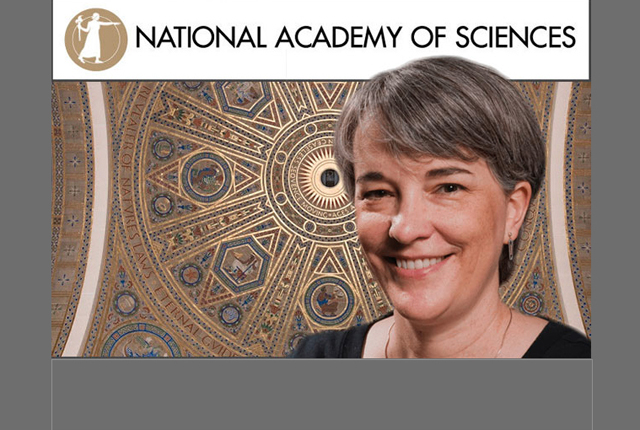Rice University biochemist and plant biologist Bonnie Bartel has been elected to the National Academy of Sciences -- one of the highest honors that can be conferred upon a U.S. scientist.
