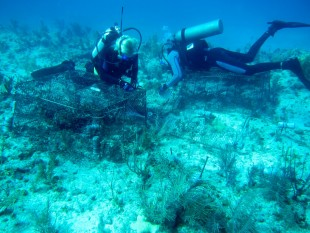Researcher divers working at a reef in the Florida Keys