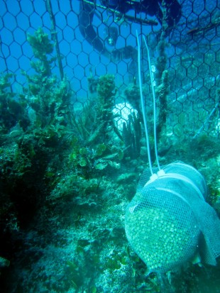Reef experiment to simulate overfishing and nutrient pollution