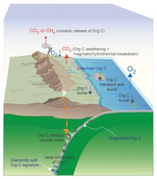 Schematic depiction of the efficient deep subduction of organic carbon