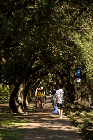 picture of students walking under tree canopy