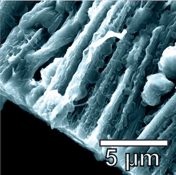 Lithium metal coats the hybrid graphene and carbon nanotube anode in a battery created at Rice University. The lithium metal coats the three-dimensional structure of the anode and avoids forming dendrites.