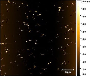 A dispersion of boron nitride nanotubes as seen through a microscope shows individual tubes and small bundles separated and solubilized by a surfactant. The process developed at Rice University will help make boron nitride nanotubes more available for applications that require nanoscale insulators. (Credit: Martí Research Group/Rice University)