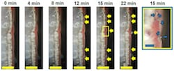 Images of a half-cell lithium metal battery show dendrites approaching a red phosphorus separator. The separator delivers a signal to the battery's electronics to shut down when dendrites threaten to create a short circuit. The discovery by scientists at Rice University could help make lithium batteries safer. (Credit: Tour Group/Rice University)