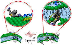 Chemists at Rice University, Durham (U.K.) University and North Carolina State University have upgraded their technique to kill cancer cells with targeted molecular motors. The light-activated motors attach themselves to cells and, when hit by near-infrared light, spin up to 3 million times per second and drill through membranes, destroying the cells within minutes. (Credit: Illustration courtesy of the Tour Group/Rice University)