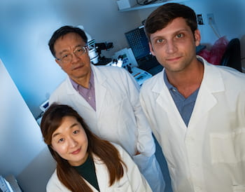 Rice University researchers, from left, So Hyun Park, Gang Bao and Timothy Davis, are advancing gene-editing techniques to help patients with sickle cell disease. They are part of the team that discovered an unexpected boost in fetal hemoglobin production, which mutes the effect of the disease. (Credit: Jeff Fitlow/Rice University)