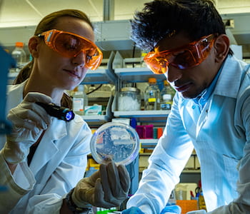 Rice University postdoctoral researcher Sara Molinari and graduate student Shyam Bhakta illuminate a colony of E. coli bacteria. The researchers and their colleagues discovered a technique to prompt bacteria to mimic stem cells' ability to differentiate when they divide. (Credit: Jeff Fitlow/Rice University)