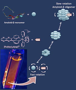 A ruthenium-based tag developed at Rice University takes advantage of fluorescent anisotropy to measure the rotation of amyloid beta oligomers as they grow in solution. Small aggregates rotate fast, while large oligomers rotate slowly, a characteristic that lets researchers watch as they grow. Amyloid beta oligomers are toxic to neurons and implicated as a possible cause of Alzheimer's disease. (Credit: Angel Martí Group/Rice University)