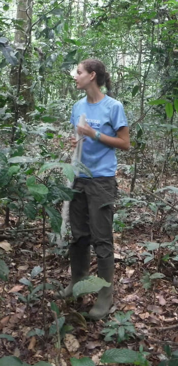 Rice University graduate student Therese Lamperty spent three months in Gabon in 2016 to study how the presence or absence of megafauna like elephants affected some of the smallest creatures in the ecosystem. (Credit: Photo courtesy of Therese Lamperty)