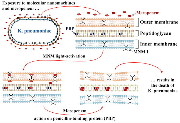 An illustration shows how motorized nanomachines triggered by light drill into bacteria, making a path for antibiotics. Experiments showed the bacteria became susceptible again to the antibiotic meropenem, to which it had developed resistance. (Credit: Don Thushara Galbadage/Biola University)