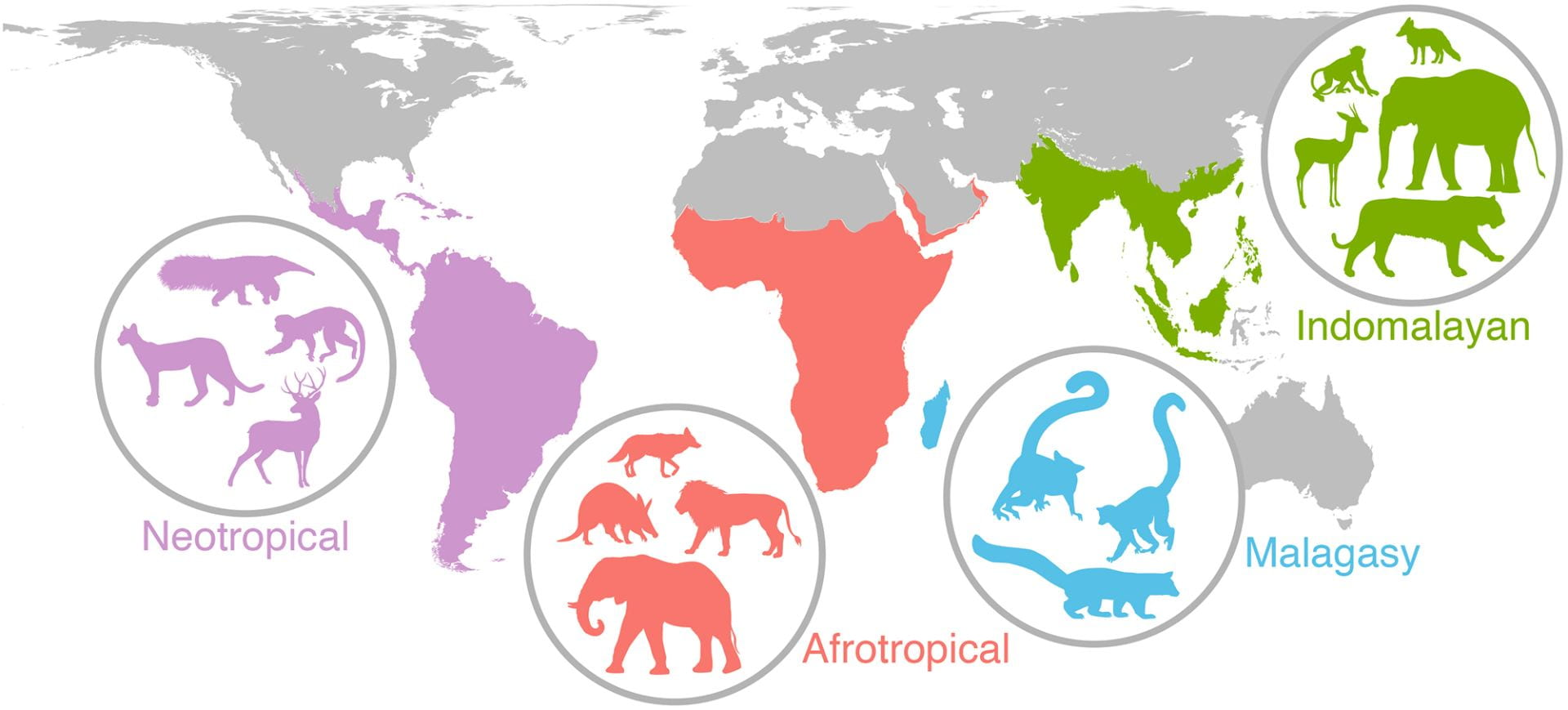 four global regions (Neotropical, Afrotropical, Malagasy, and Indomalayan) with inset unidentified animal species silhouettes for each