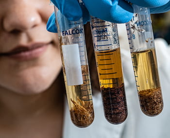 Rice University graduate student Ilenne Del Valle holds samples of soil with various concentrations of organic carbon and proteins produced by plants that regulate the acquisition of nutrients and pest control. (Credit: Jeff Fitlow/Rice University)