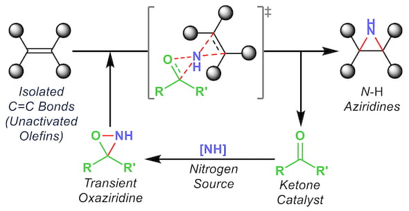 A Rice University method to produce aziridines, building blocks in drug design, makes the process far less expensive and more environmentally friendly than current methods that use metal catalysts. (Credit: Kürti Research Group/Rice University)