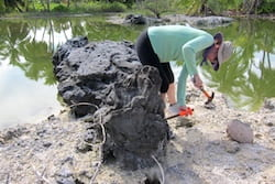 Georgia Tech climate scientist Kim Cobb samples an ancient coral for radiometric dating. She is part of a team of Rice University and Georgia Tech scientists using data from coral fossils to build a record of temperatures in the tropical Pacific Ocean over the last millennium. (Credit: Cobb Lab)