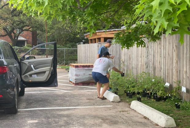 Campus garden adopts out summer plants to good homes