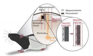 A schematic of experimental setup used to demonstrate the viability of miniature, magnetoelectric-powered neural stimulating technology