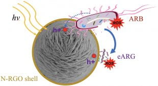 schematic depicting antibacterial action of graphine oxide-wrapped nanospheres