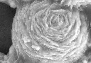scanning electron microscope image depicting the graphene oxide shell of an antibacterial nanoparticle