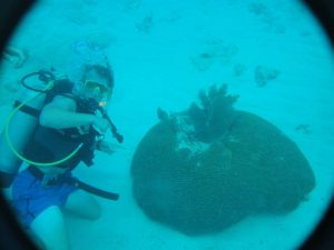 On a scuba-diving adventure as a coral reef mate, Claggett encountered a brain coral in the Alligator Reef off the coast of Florida.