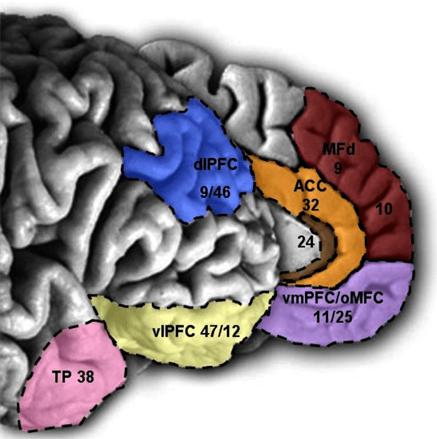 Mind Over Matter: How the Brain Suppresses Revenge