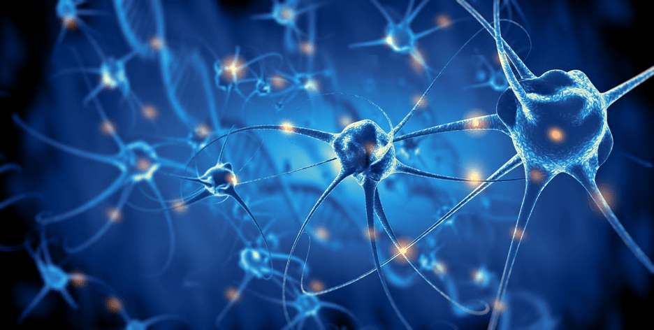 New Type of Neuron Discovered as Playing Key Role in Long-Term Memory Formation