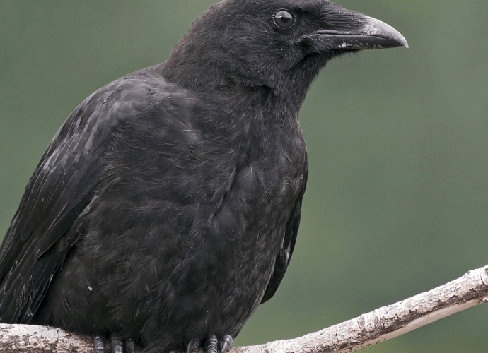 Contradicting the Disparity Between Primate and Avian Brains