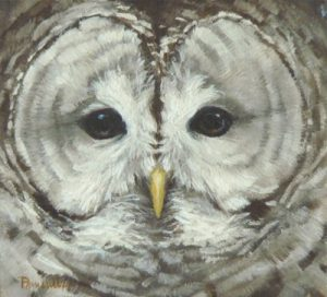 Blog-Who Cooks For You-Barred Owl Portrait