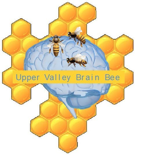 brain bee picture