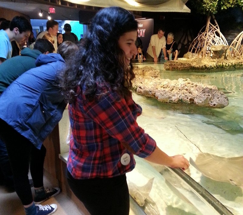 Students enjoy the sharks and rays touch tank at the beginning of our visit.