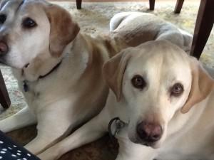 Alejandra's dogs, Lilly & Sparky