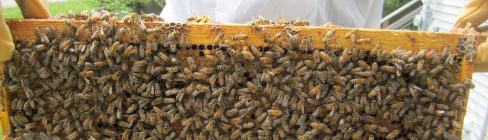 Dartmouth Beekeeping Association